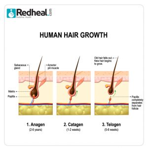 hairloss,dermaetologists near me