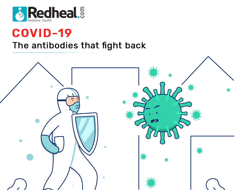 COVID 19: The antibodies that fight back